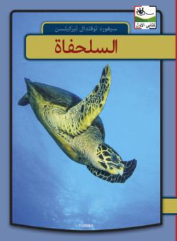 Skildpadder - arabisk