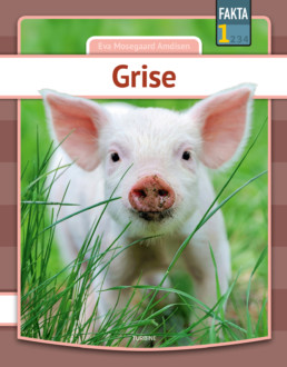 Grise